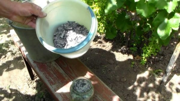 Preparazione di alimentazione per i lamponi in estate
