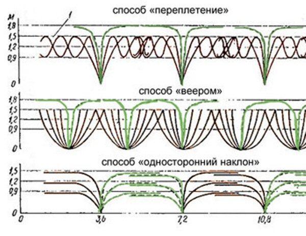 Lo schema di piantagione di mora dipende dal metodo di formazione del cespuglio