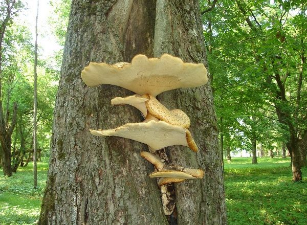 Funghi sugli alberi