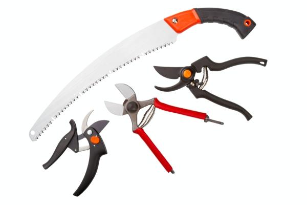 Un potatore, un seghetto, un coltello da giardino e un trituratore devono essere affilati e disinfettati.