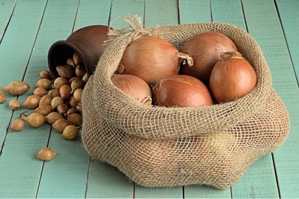 Cipolle Ercole: descrizione e caratteristiche della varietà, semina e cura