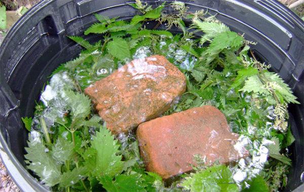Opzione cottura lievito con ortica