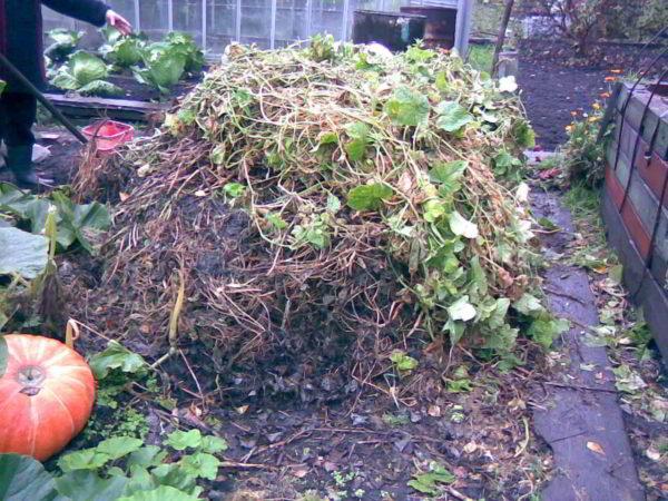 Il compost naturale è un rifiuto organico marcio.