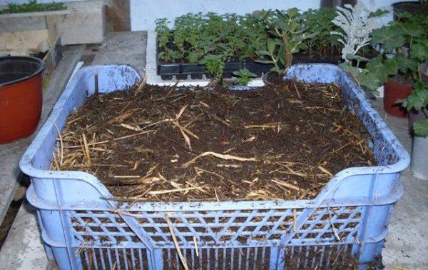 Il Biohumus è utile per le piante