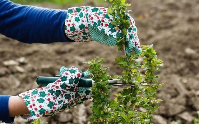 condimento per la potatura di foglie d'autunno uva spina