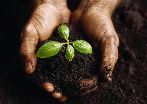 Il Biohumus è anche utile per le piante d'appartamento.