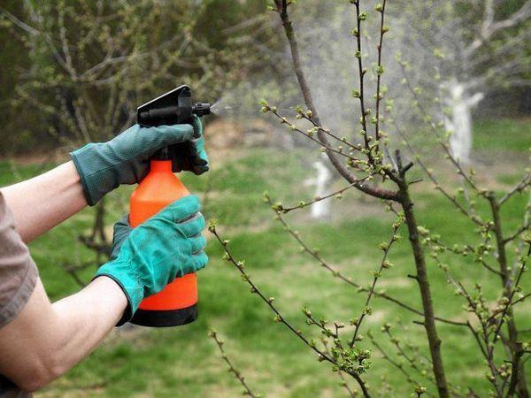 Acido borico per le piante