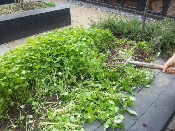 siderata in giardino