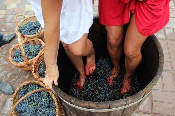 Con la pressione delle uve è importante non danneggiare i semi