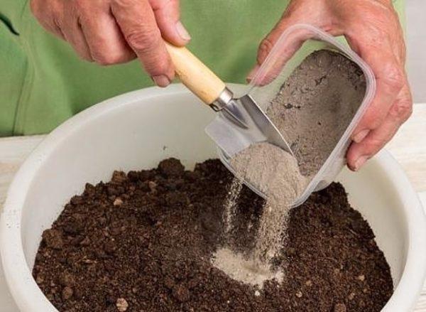 Le ceneri possono essere mescolate con il terreno e poi sparse intorno agli alberi.