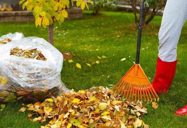 compost da foglie di alberi in sacchetti
