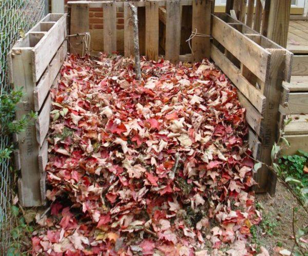 Foglie di compost