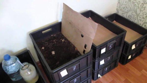 Puoi allevare vermi in semplici scatole a casa nel seminterrato