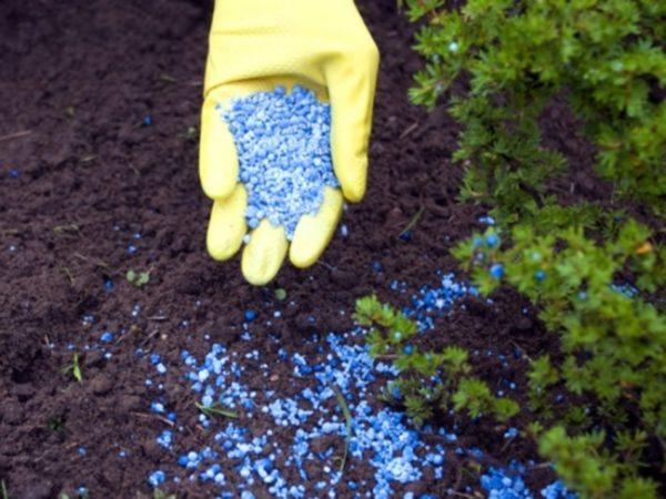 Fertilizzanti minerali