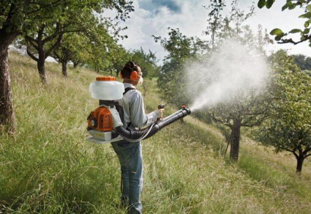 spruzzando alberi autunnali