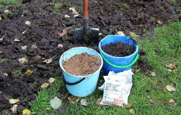 La torta di senape viene introdotta in autunno durante lo scavo del terreno