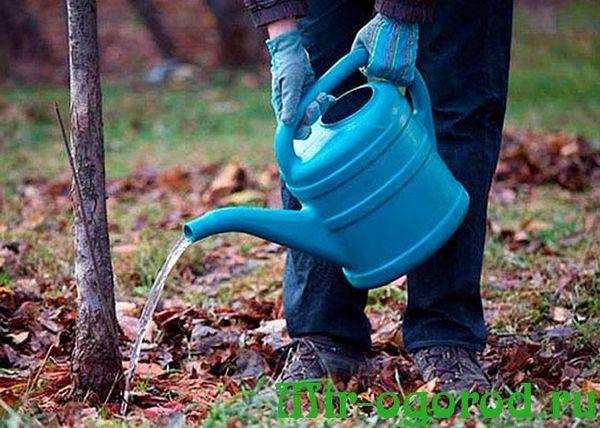 La fecondazione è vietata senza precedente irrigazione pesante.