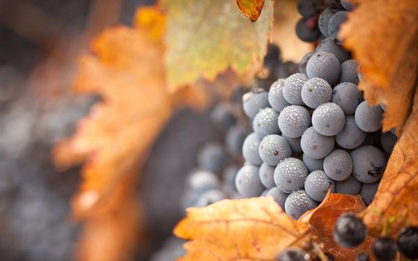 Top vestirsi di uva in autunno