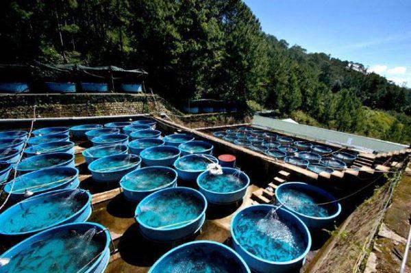 Lo storione è molto sensibile alla qualità dell'acqua.