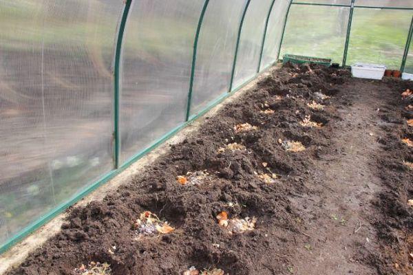 La materia organica deve essere aggiunta ai pozzetti o ai letti prima di piantare.