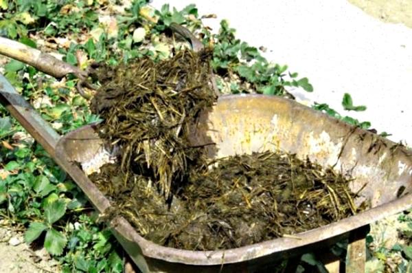 Verbasco come fertilizzante