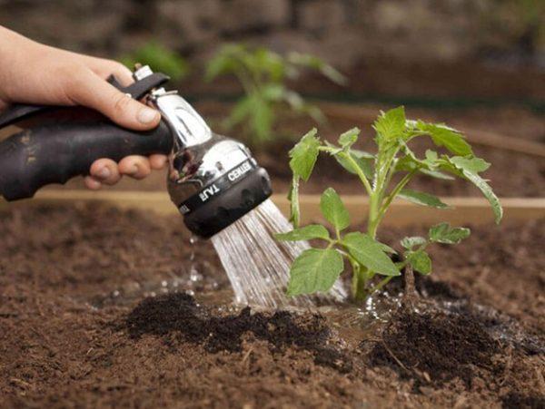 Tutta l'irrigazione del pomodoro viene effettuata secondo diversi schemi.