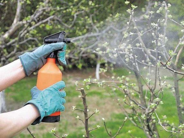 Usato non solo per le piante