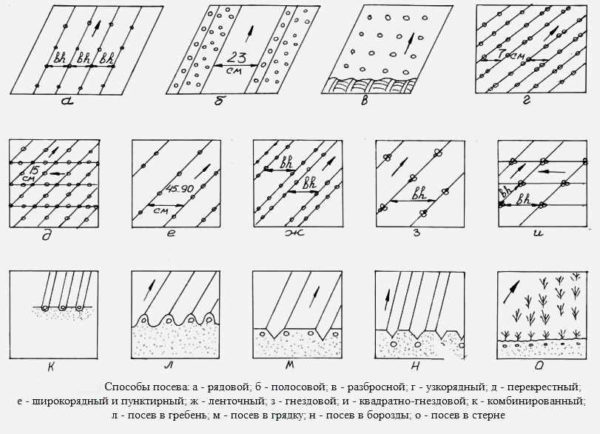 Schema di piantagione di carote