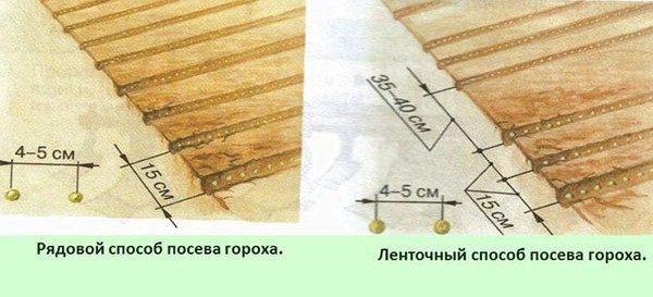 Schema di piantagione di piselli