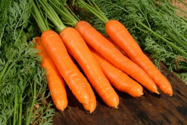 buona raccolta di carote